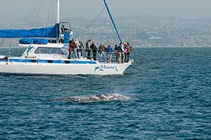 Whale watching in California